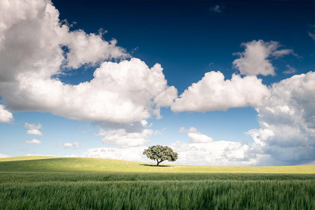 Arbre sur une coline surplombé de nuages