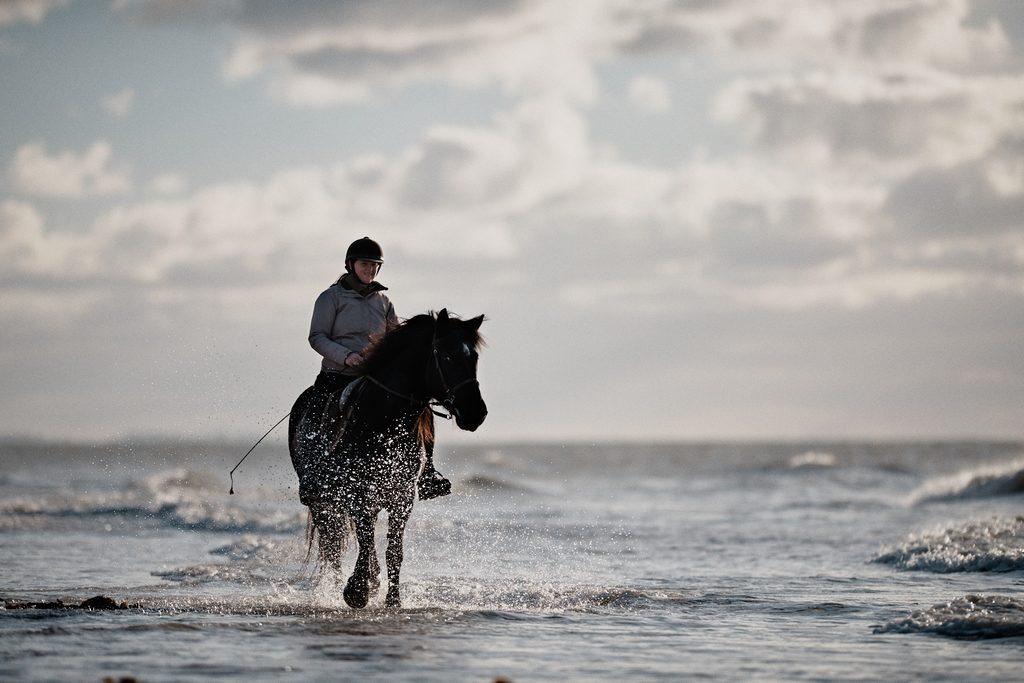 Photo d'un cheval les pieds dans l'eau