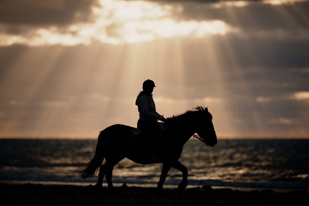 Photo de la silhouette d'une jument photographiée sur la plage