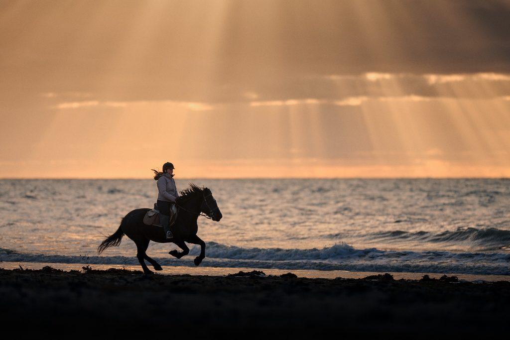 Photo d'un cheval galopant sur la plage par un photographe équestre proche de Saint-Lô : Martyn photography