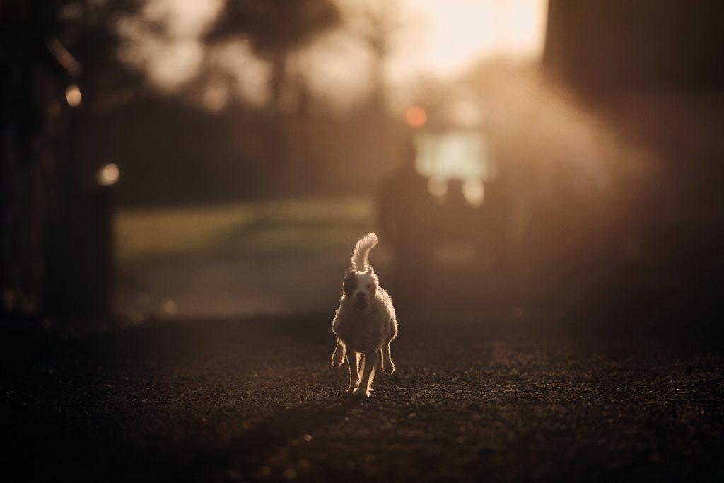 Séance photo avec un chien
